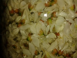 http://bobo.45.free.fr/Pix/2013-06-12_Fleur-d-Acacia/2013-06-12_Fleur-d-Acacia_03-P.jpg